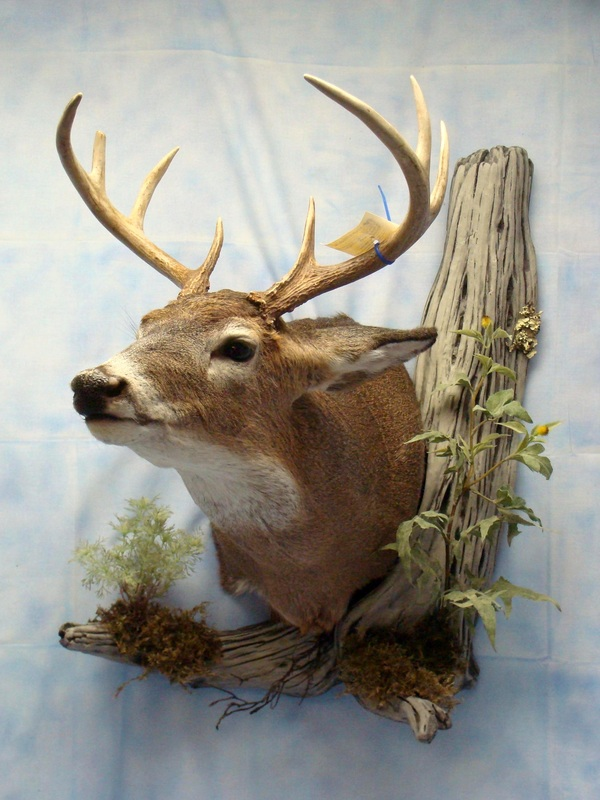 Gallery - Fur, Feathers & Fins Taxidermy